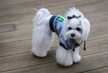 Street Style Dogs / Hip styles for the stylish pooch