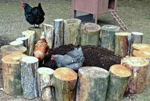 Baghave høns