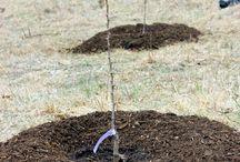 Plant Fruit Trees