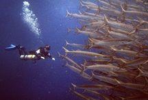 Scuba Diving Pics July 2014 / by PADI