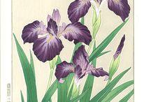 Kawarazaki Shodo - Woodblock Print