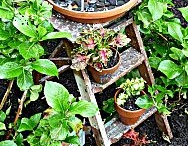 Gardening / Anything garden related. / by Laini Astles