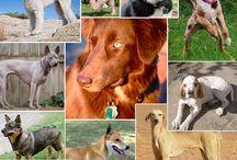 Dogs & Co. (Hunde & andere Tierchen) / The wonderful world of animals (die wunderbare Welt der Tiere)
