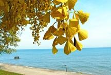 Autumn Breeze  / by Eirwyn