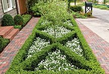 My Love Of Boxwoods & Hydrangeas