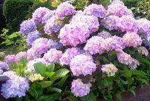 Purple Grey Garden / Pics of my dream garden