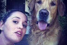 My boy!! / Golden retriever