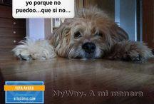 Campaña Promo Bitacoras Animales