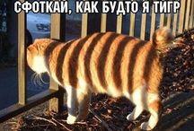 Для позитиФчика)))
