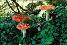 Fungi / by Bo Tamaki