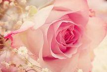 Kukat, ruusut