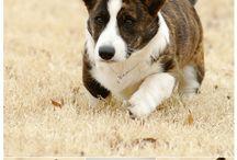 Puppies / by Shawna McDonald