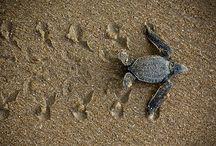 Tartarugas / by Portal Casa.com.br