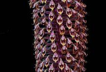 Kitti Virág