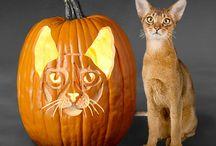 Pumpkin Fun! / Fun Cat Pumpkin Carving Ideas!