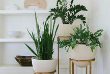 plants indoor home dec
