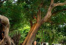 Ivory Lodge at Lion Sands Game Reserve