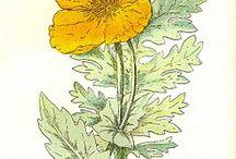 Designspiration: Botanical Prints