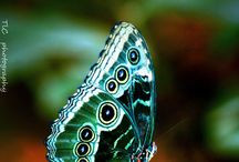 butterfly and nature