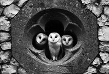 owls / pictures of owls are rad / by beth
