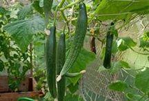 Gemüse anbau und Pflege