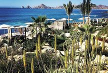 Nature and Landscapes in Cabo / Cabo is blessed by nature. We assure that you'll never want to leave. http://visitloscabos.travel/  / by Los Cabos Tourism