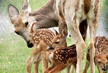 DEER! FAWNS! DEER! / by Coffee Fawn