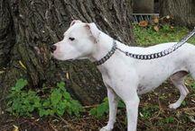 Big Dog Breed Leashes