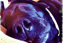 Hipstadog fotografía canina  / Fotigrafía canina que Mr Trufa realiza con hipstamatic o cámaras lomo