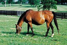 equine breeding / pregnancy, foaling, foal & mare health