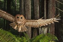 Redwood Forest Facts / Learn about the plants and animals that make up the redwood forest!