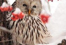Beautiful / by Rene Stokesberry