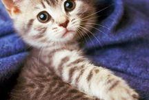 Şirin hayvanlar (kedi, köpek vb.)