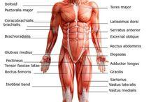 Bodybuilding ABC Guides