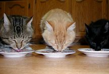 Nutrition / Facts and Tips on Pet Nutrition