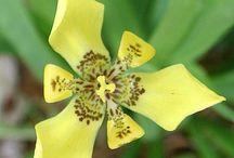 Gammaldags krukväxter med mera