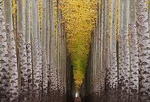 Nature / by John Elliott