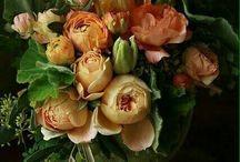 Växter och Blommor