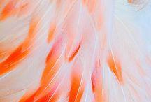 Colour Palette Inspiration / Inspiring Colour Combinations for your next project
