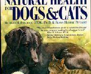 holistic health for pets