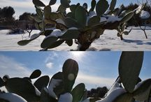 Natura / Neve Puglia