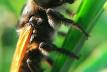 macrosmartphotography / Its about macrophotography with camera smartphone