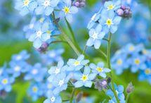 Flower -blue