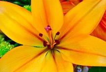 My Escape - Flowers