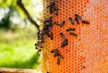 Natural Beekeeping / I recently started beekeeping in an effort to do my part in saving the bees and agriculture and fight colony collapse disorder (CCD).