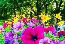 Flowers / by Sandi Sturdy