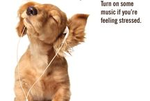 Stress Challenges / Try these simple challenges to relieve daily stress.  / by Silver&Fit