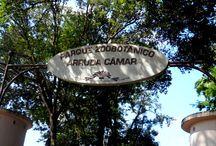 PARQUE ZOOBOTÂNICO ARRUDA CÂMARA -  A Bica / Parque Zoobotânico Arruda Câmara ( A Bica) - João Pessoa-PB - Brasil.