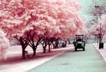 Pretty in pink... / All things pretty + all things pink = pretty in pink xxx