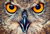 Owl & Eagels!